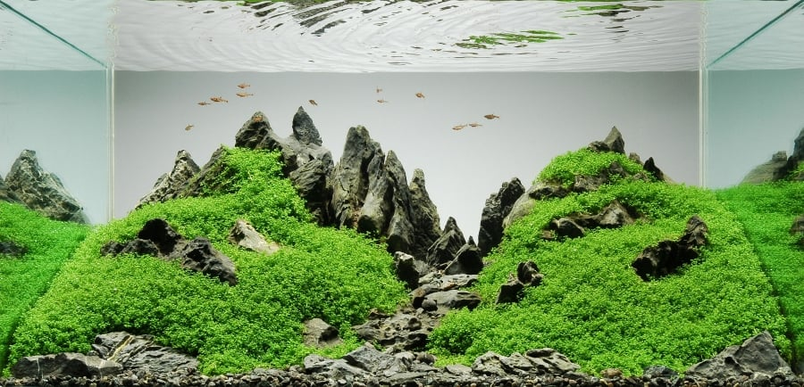 Menekuni Hobi Aquascape