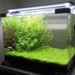 Aquascape: Tips Menanam Michrantemum Monte Carlo